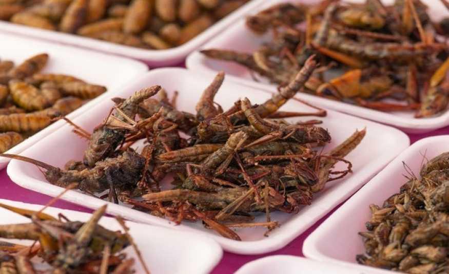 أكل الحشرات