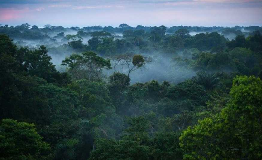 النيران تلتهم غابات الأمازون..